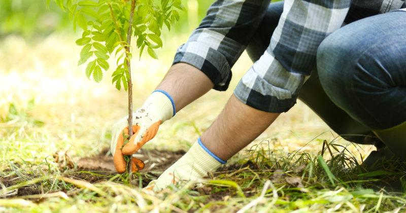Santa Casa de Passos, inicia processo de compensação ambiental